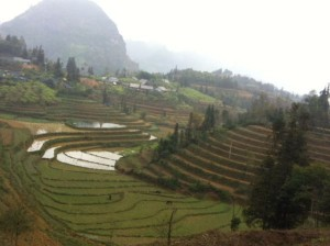 riziere en terrasses