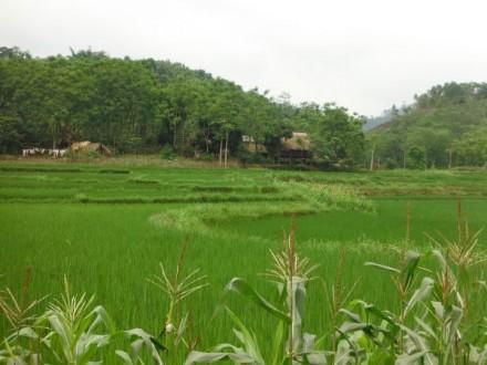 riziere a Ha Giang